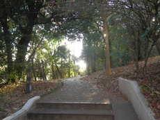 手前の階段はサニーヒル表山の敷地です